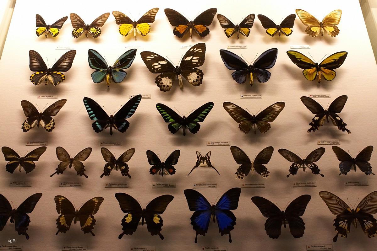 На фото: Саморазвитие. На хутор бабочек ловить... (судьба человека, заметка), автор: Basmach