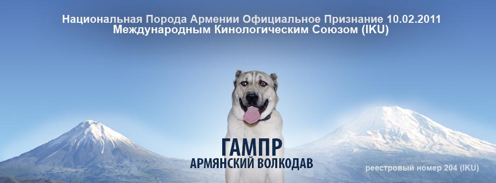 На фото: Гампр - армянская овчарка кавказской национальности (репортаж с выставки), автор: Poletaeva