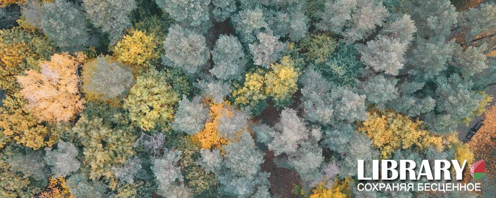 На фото: Проблемы экономики. Лес - сырье стратегическое, автор: admin