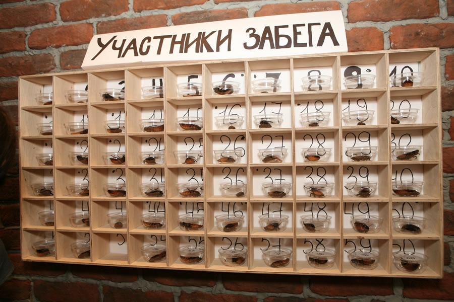 На фото: © Белорусы ставят на всё: на хоккей, на футбол и на тараканов, автор: admin