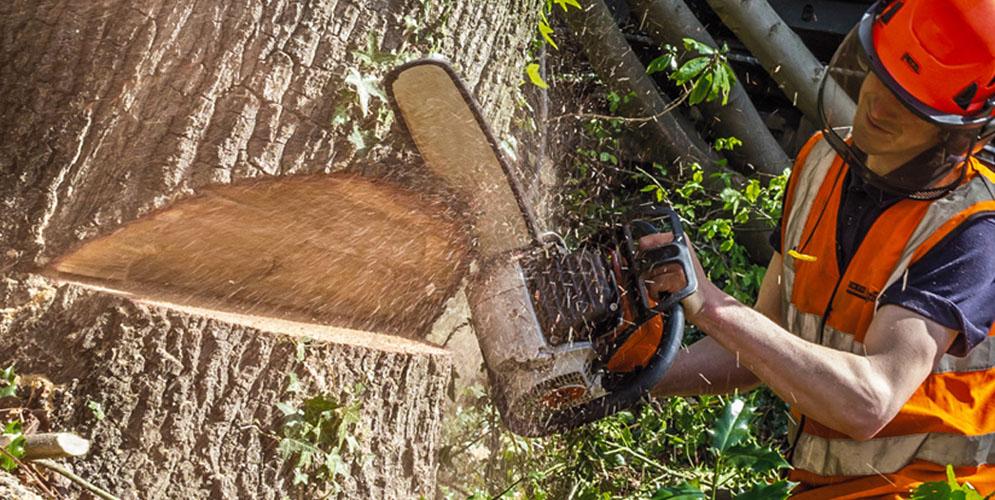 На фото: Валка деревьев - это искусство (авторский репортаж), автор: admin
