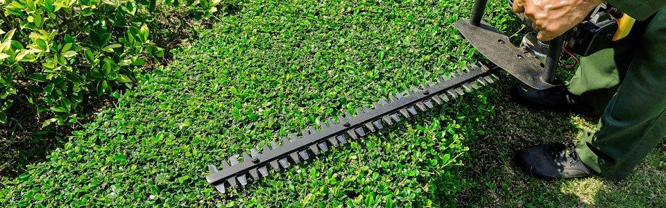На фото: Весенняя обрезка и покос в саду, автор: admin